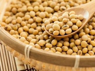 soja Le Togo mise sur la production du soja pour éradiquer la malnutrition