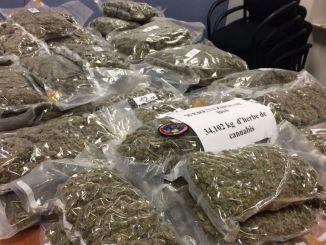 canabis Togo: des kilos de cannabis saisis en plein couvre-feu