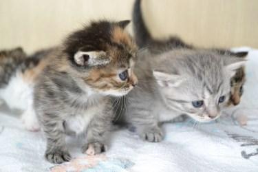 猫が尻尾の付け根を嫌がる理由とは?猫の急所を紹介します
