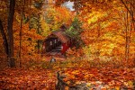 Dane of Sacred Son stands near a covered bridge in autumn.