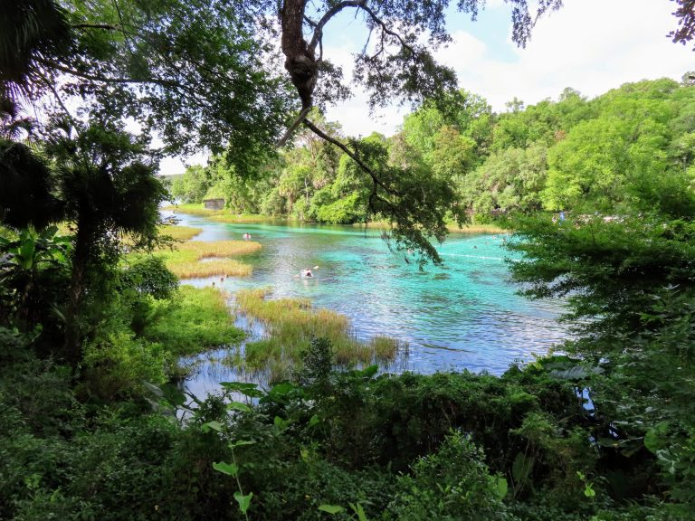 Rainbow Springs State Park, Florida, United States – 1 Day Trip