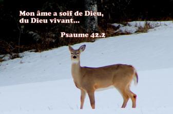 Mon âme a soif de Dieu, du Dieu vivant…