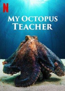 My Octopus teacher docu blog