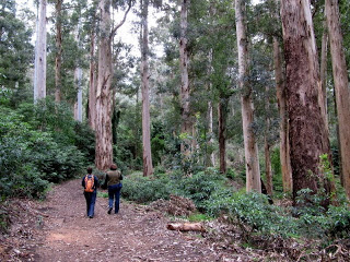 Tokai Forest Safety Poll