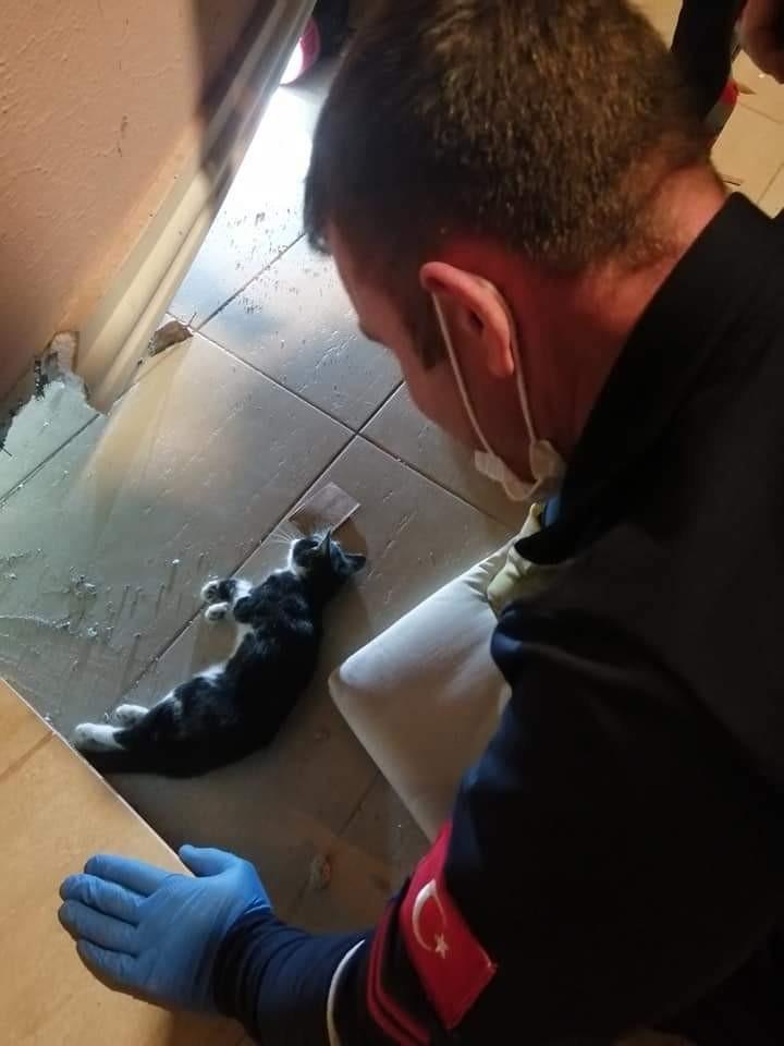 Duvar arasına sıkışan kedi kurtarıldı