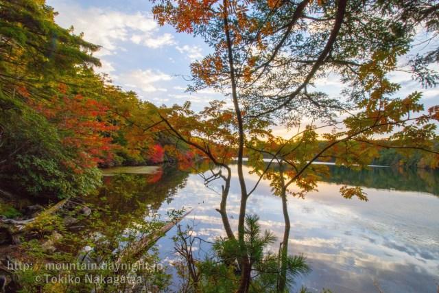 八ヶ岳・白駒池の紅葉