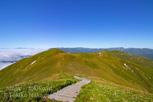 仙ノ倉山山頂から平標山、苗場山、白馬三山