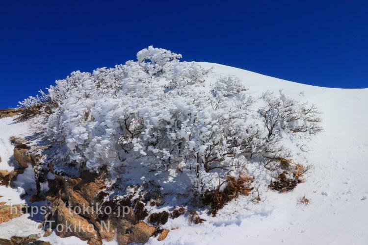 谷川岳山頂付近の樹氷