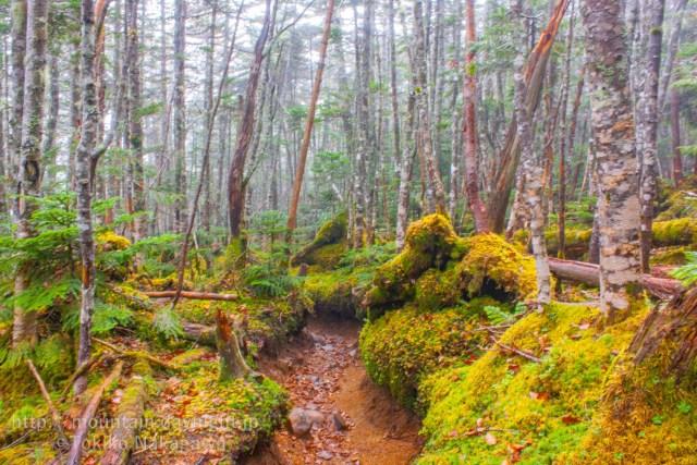 甲武信ヶ岳と苔の森