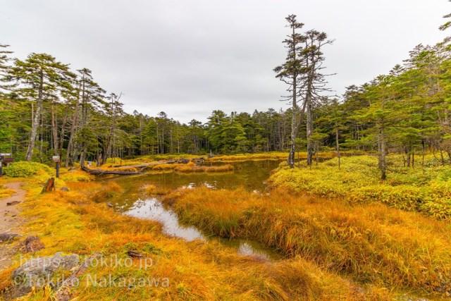 北八ヶ岳・茶水の池の紅葉