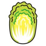 白菜 栄養 効果 レシピ