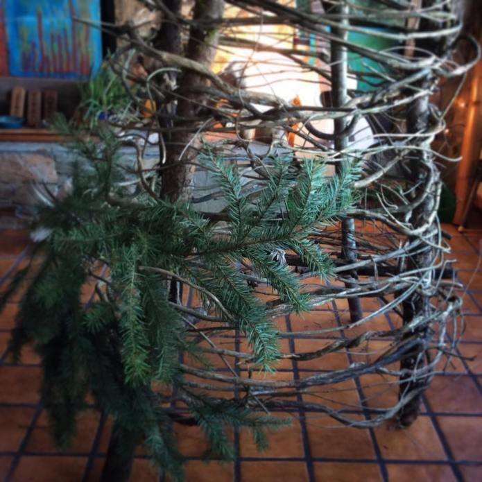 solstice-tree5
