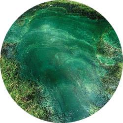 Mineral Alga