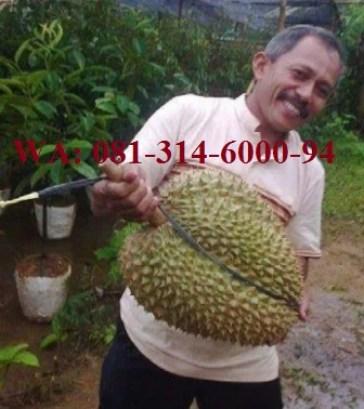 jual bibit durian montong di aceh