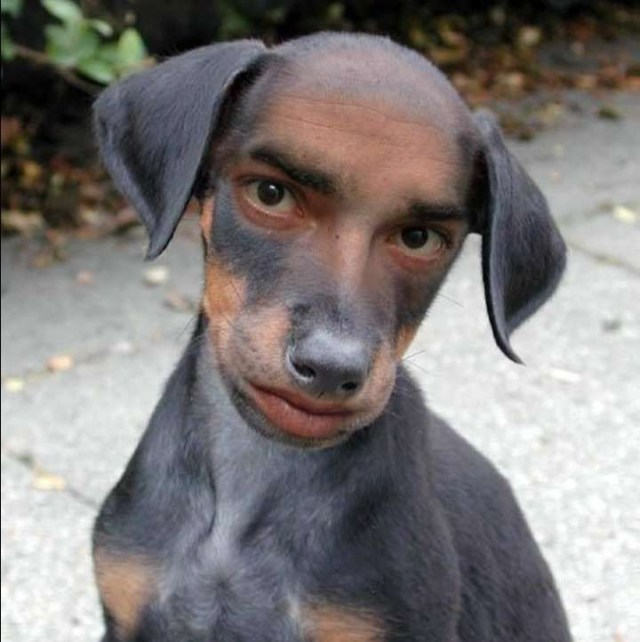 To Look Like A Dog