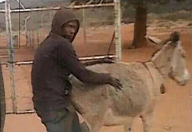 Having S£x with A Donkey