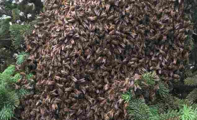 Jealous Bees Attack Man And Woman While They Were Having S3x Inside A Bush