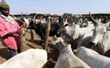 Fresh Attacks In Oyo By Herdsmen, See What Sunday Igboho Might Be Forced To Do