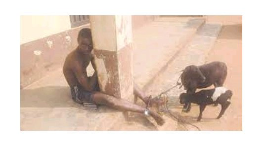 It Gives Me Great Pleas­ure Whenever I Have s*x with Goats - 15-Year-Old boy Confesses