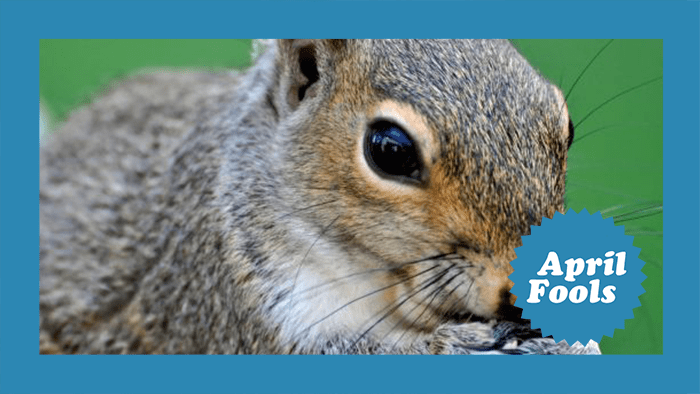 Squirrels – Nut Hunters or Just Nuts?