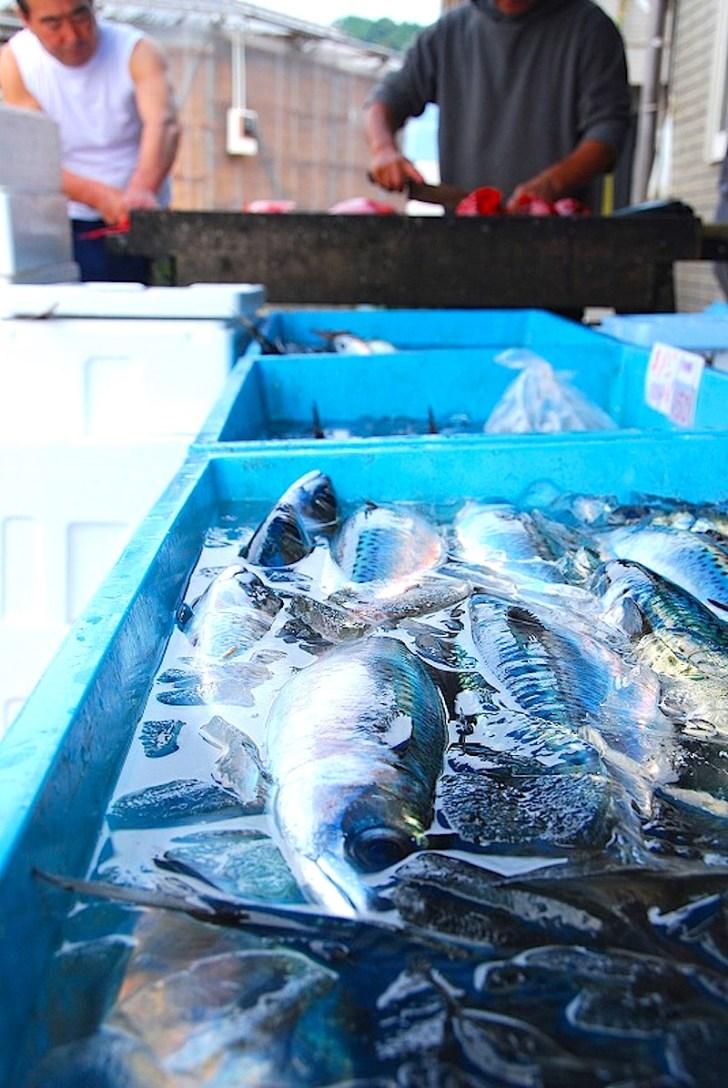 旬の地魚を直売する丸吉商店