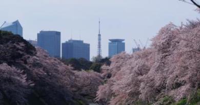 Cherry Blossom (Sakura) Forecast for Japan 2019