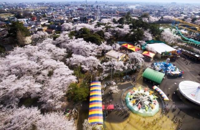 華蔵寺公園開花情報