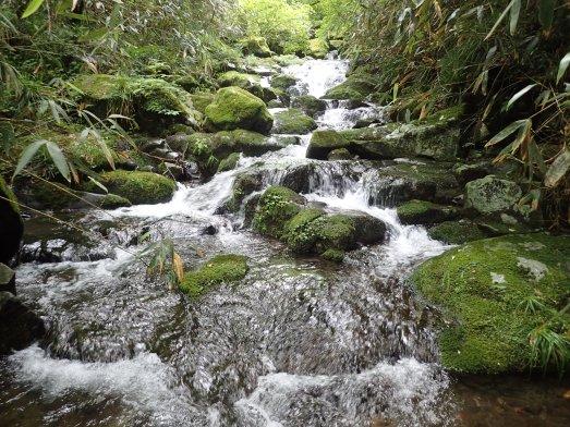 苔岩の点在する滑滝。