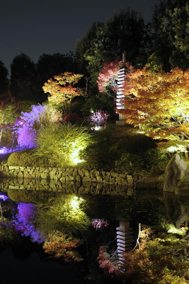 目白庭園『秋の庭園ライトアップ』