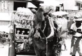 こうして荷車に荷物を積んだ馬車が町中を配達して廻っていました。