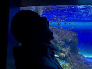 マリホ水族館いただきます