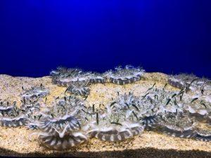 マリホ水族館サカサクラゲ