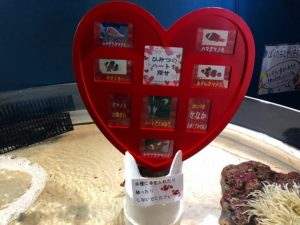 マリホ水族館バレンタイン企画