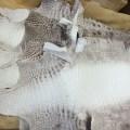 【ヒマラヤクロコダイルの特徴・品質・染色工程】ヒマラヤと呼ばれるクロコダイル革とは?