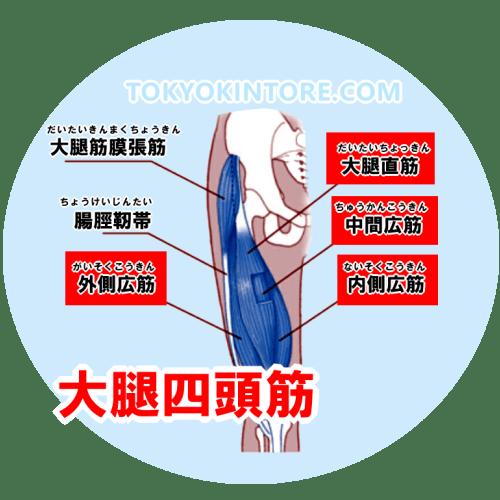 大腿四頭筋を鍛える筋トレのやり方とフォーム