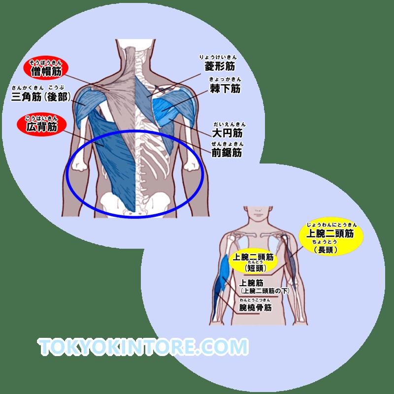 広背筋下部と僧帽筋下部と上腕二頭筋に効果を出す筋トレのやり方とフォーム