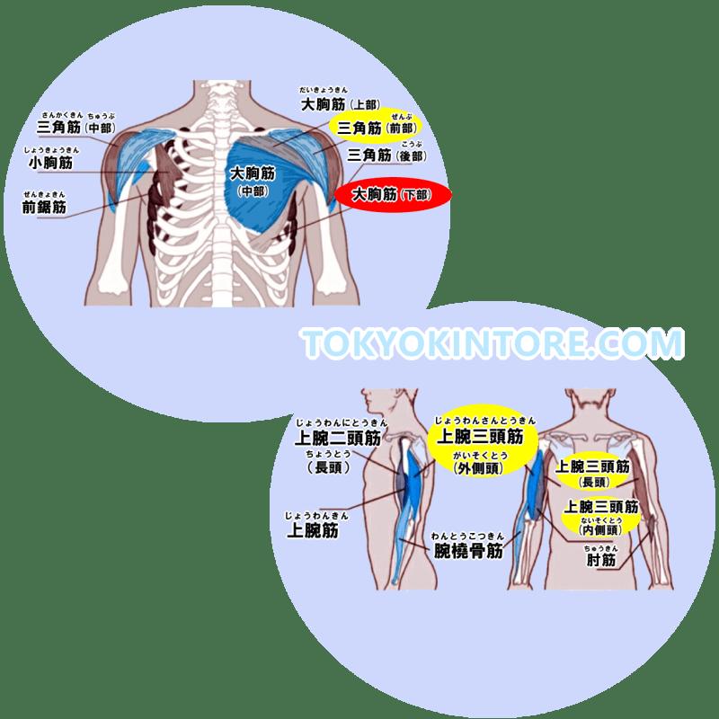 大胸筋下部と三角筋前部と上腕三頭筋に効果を出す筋トレのやり方とフォーム