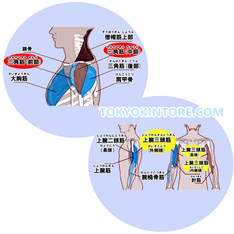 三角筋中部と三角筋前部と上腕三頭筋に効果を出す筋トレのやり方とフォーム