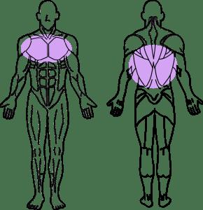 スーパーセット法トレーニング~大胸筋と広背筋