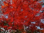 korakuen koishikawa gardens