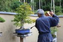 Bonsai no parque Showa Kinen