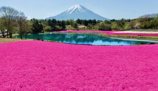 【GWからが見頃】「富士芝桜まつり」は8種類の芝桜と富士山のスペシャルコンボが楽しめる