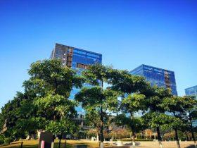 青い空と散歩道