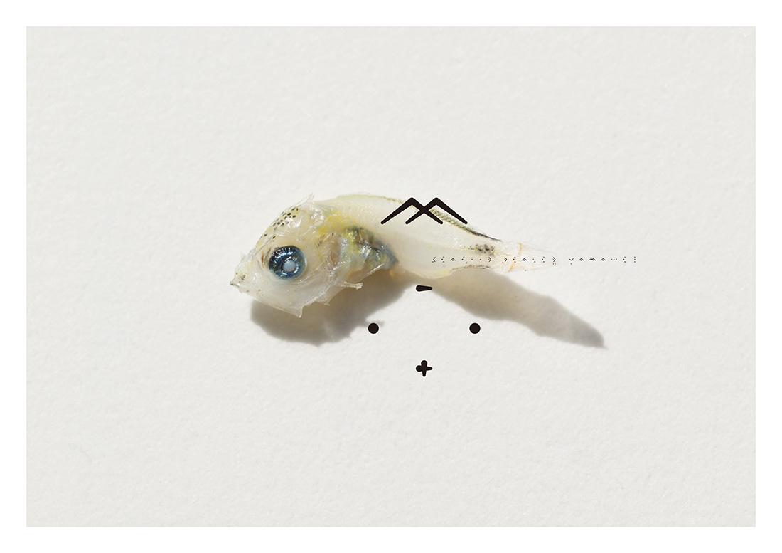 SEAFOOD DEALER YAMAHEI / 2009 | ポスター