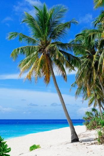 Ilhas Bermudas liberam visto de residência para nômades digitais