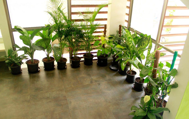 first-floor-open-space-plants