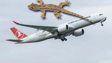 Photo of THY uçağından kertenkele çıktı