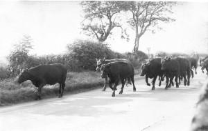 Rush Hour Toll Lane 62 63