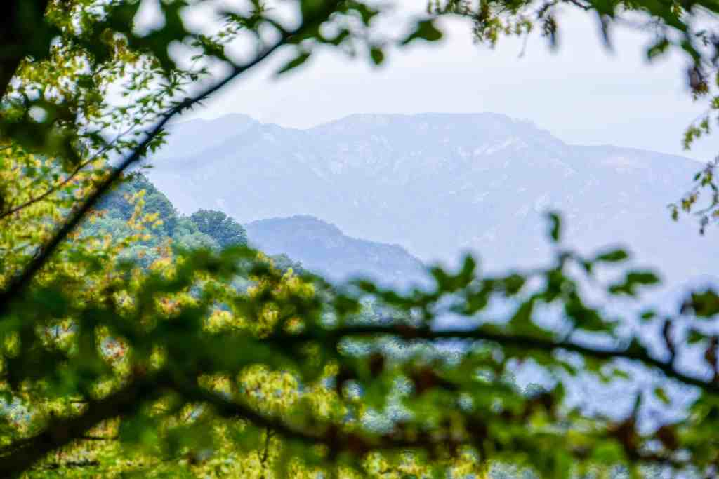 20150901-081305-Janapar Trail Part 2-01677