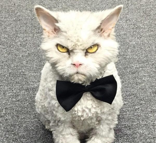 不機嫌なネコ アルバートのインスタグラム